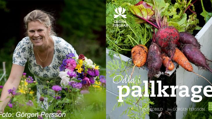Eva Robild odla i pallkrage